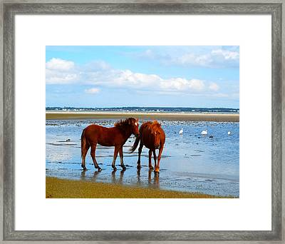 Wild Horses And Ibis 2 Framed Print by Cindy Croal