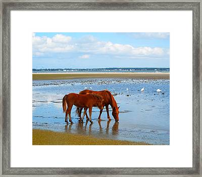 Wild Horses And Ibis Framed Print