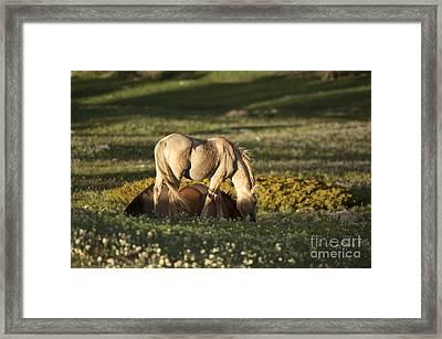 Wild Horses-animals-image-18 Framed Print