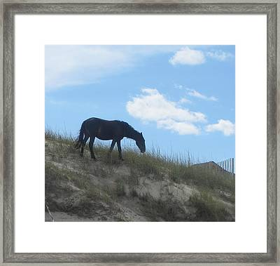 Wild Horses Of Corolla 3 Framed Print by Cathy Lindsey