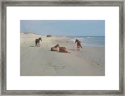 Wild Horses On The Beach Framed Print