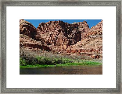 Wild Horses Framed Print by Robert  Moss