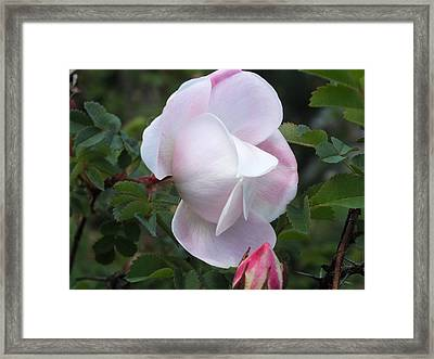 Framed Print featuring the photograph Wild In Pink by Gene Cyr