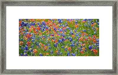 Wild In Texas Framed Print by David  Norman