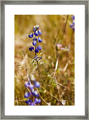 Wild In The Field Framed Print