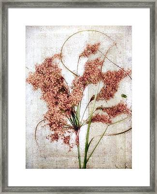 Wild Indian Rice In Autumn #2 Framed Print