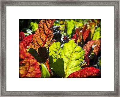 Wild Lettuce Framed Print by Karen Wiles