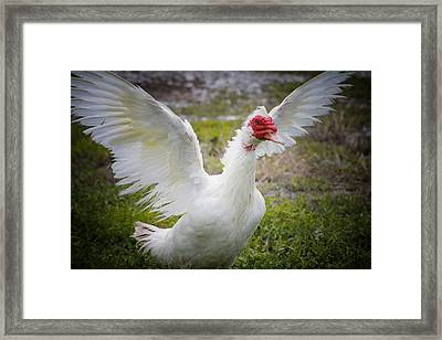 Wild Life Framed Print by Kimberly Danner