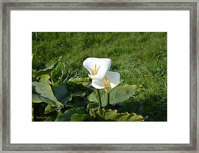 Wild Lilies Framed Print