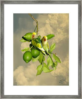 Wild Lovebirds Of Florida Framed Print by IM Spadecaller