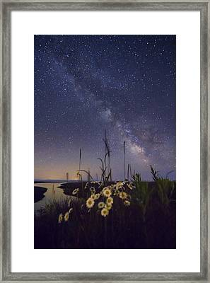 Wild Marguerites Under The Milky Way Framed Print