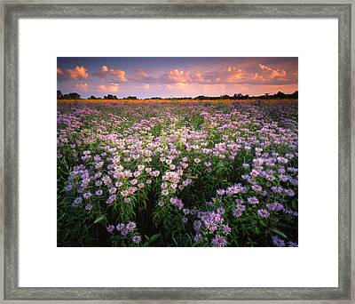 Wild Mints Galore Framed Print by Ray Mathis