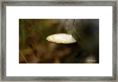 Wild Mushroom Framed Print by Alex King
