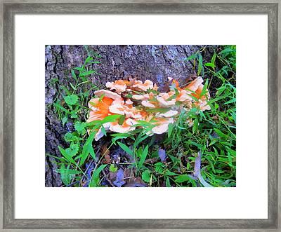 Wild Mushroom Framed Print by Peter LaPlaca