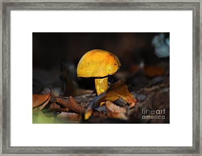 Wild Mushroom Framed Print by Stuart Mcdaniel
