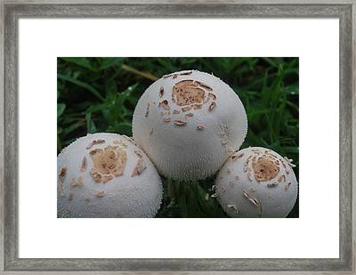Framed Print featuring the photograph Wild Mushrooms by Miguel Winterpacht