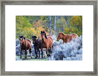 Wild Mustang Autumn Framed Print by Mike Dawson