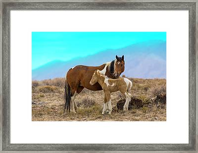 Wild Mustang Horses In The West Desert Framed Print by Don Cook
