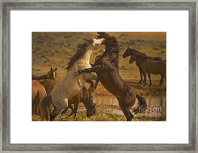 Wild Mustang Stallions - Signed Framed Print by J L Woody Wooden