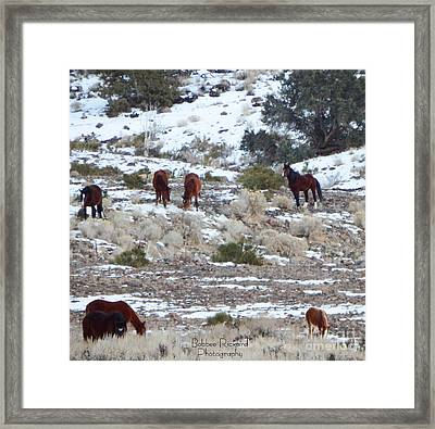 Wild Mustangs In A Nevada Winter Framed Print