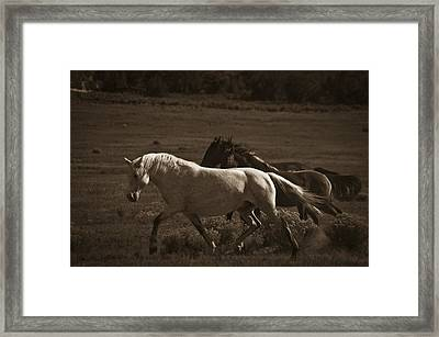 Wild Mustangs Of New Mexico 10 Framed Print