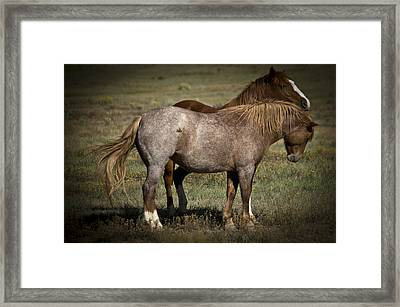 Wild Mustangs Of New Mexico 2 Framed Print