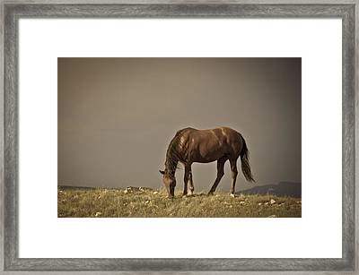 Wild Mustangs Of New Mexico 20 Framed Print