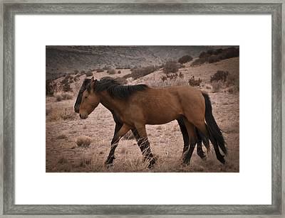 Wild Mustangs Of New Mexico 23 Framed Print