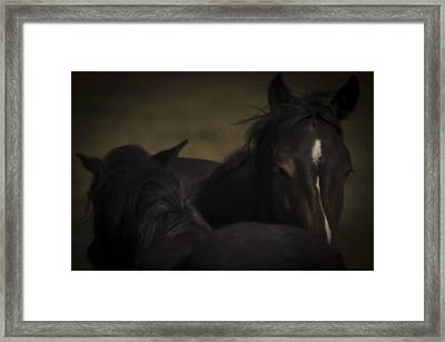 Wild Mustangs Of New Mexico 25 Framed Print