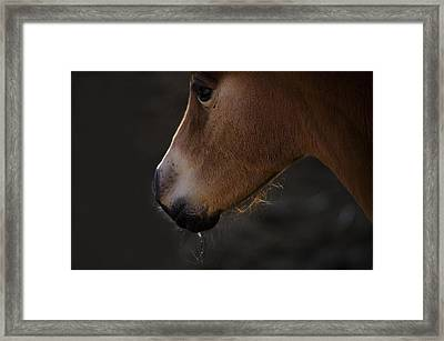 Wild Mustangs Of New Mexico 27 Framed Print