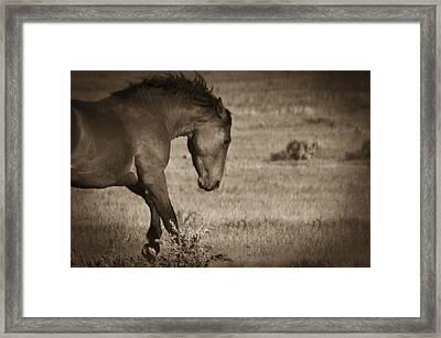 Wild Mustangs Of New Mexico 31 Framed Print