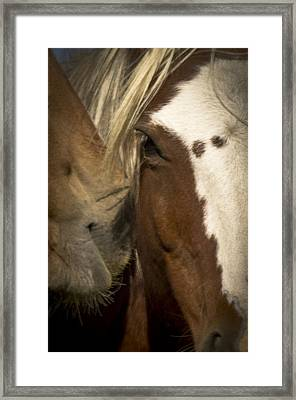 Wild Mustangs Of New Mexico 32 Framed Print