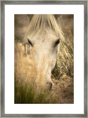Wild Mustangs Of New Mexico 36 Framed Print