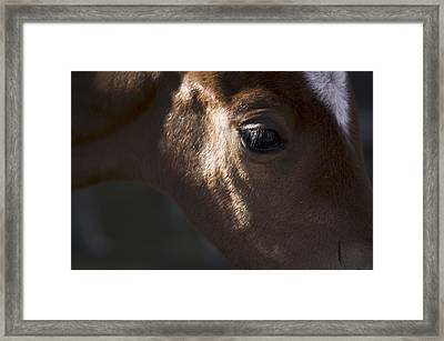 Wild Mustangs Of New Mexico 41  Framed Print