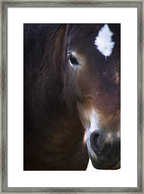 Wild Mustangs Of New Mexico 42 Framed Print