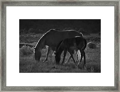 Wild Mustangs Of New Mexico 7 Framed Print