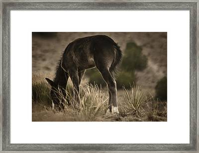 Wild Mustangs Of New Mexico 8 Framed Print