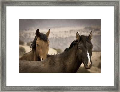 Wild Mustangs Of New Mexico Framed Print