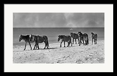 Quiet Time Photographs Framed Prints