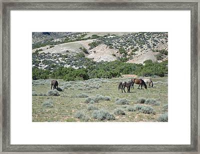 Wild Mustangs Framed Print