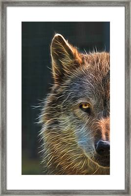 Wild Night Framed Print