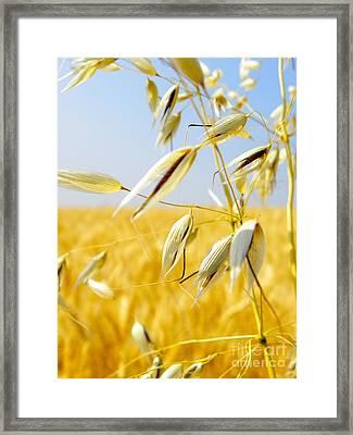 Wild Oats Framed Print by KD Johnson