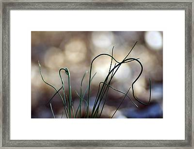 Wild Framed Print by Off The Beaten Path Photography - Andrew Alexander