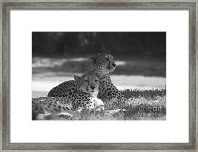 Wild Ones Framed Print