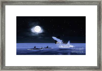 Wild Orcas Framed Print by Methune Hively