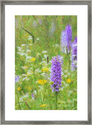 Wild Orchid Watercolour  Framed Print by Tim Gainey