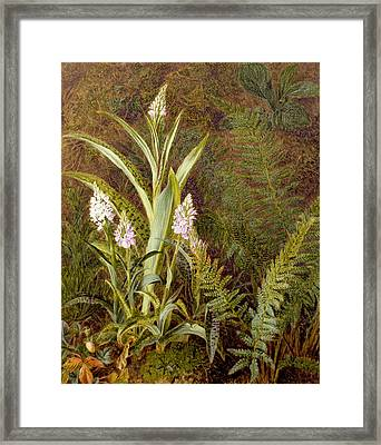 Wild Orchids Framed Print by Marian Emma Chase