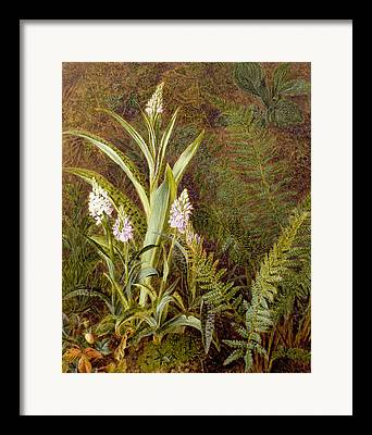 Wild Orchid Framed Prints