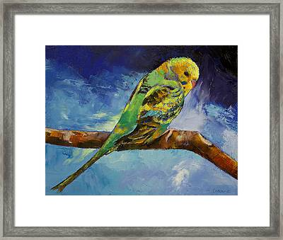 Wild Parakeet Framed Print by Michael Creese