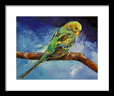 Parakeet Framed Prints